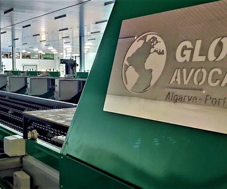 Global Avocados